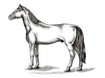 hest-stilling